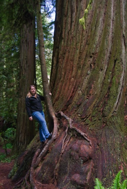T and a redwood1